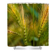 Wonderous Wild Wheat Shower Curtain