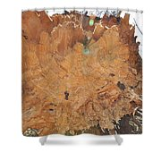Wood Art Shower Curtain