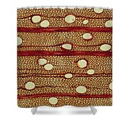 Wood Cross Section Shower Curtain