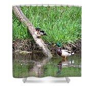 Wood Duck And Mallard Shower Curtain