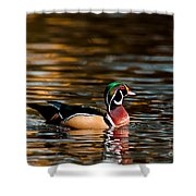 Wood Duck At Morning Shower Curtain