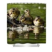 Wood Duck Babies Shower Curtain