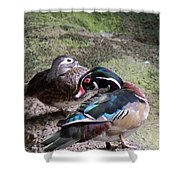 Wood Duck Couples Shower Curtain