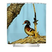 Wood Duck Drake In Tree Shower Curtain