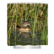 Wood Duck Drake Shower Curtain