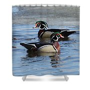 Wood Duck Drake Pair Shower Curtain