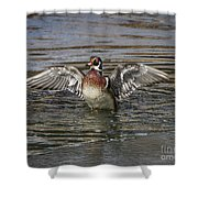 Wood Duck Drake Wing Flap Shower Curtain