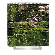 Wood Duck Family Shower Curtain