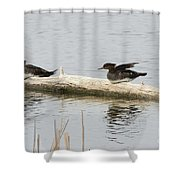 Wood Duck Females On A Log  Shower Curtain