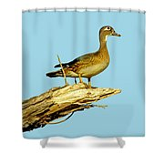 Wood Duck Hen In Tree Shower Curtain