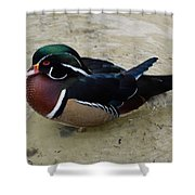 Wood Duck In The Water Shower Curtain