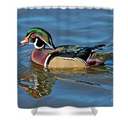 Wood Duck Male Calling Shower Curtain