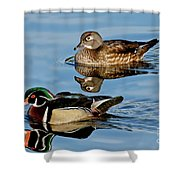 Wood Duck Pair Swimming Shower Curtain