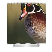 Wood Duck Portrait Shower Curtain