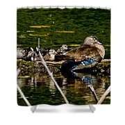 Wood Duck Rest Time Shower Curtain