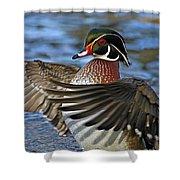 Wood Duck Standing Ovation Shower Curtain