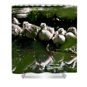 Wood Ducklings On A Log Shower Curtain