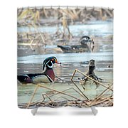 Wood Ducks In The Mist Shower Curtain