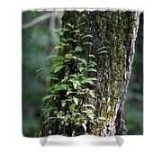 Wood Flora 2013 Shower Curtain