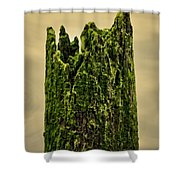 Wood In The Bay Shower Curtain