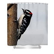 Wood Pecker Shower Curtain