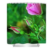 Wood Rose Buds Rosa Woodsii Wild Shower Curtain