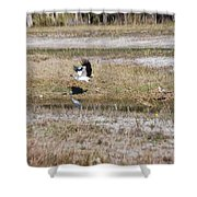 Wood Stork And Herons Shower Curtain