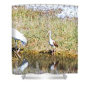 Wood Stork And Ibis And Heron Shower Curtain