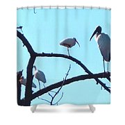 Wood Stork And Ibis Shower Curtain