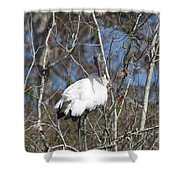 Wood Stork In A Tree Shower Curtain