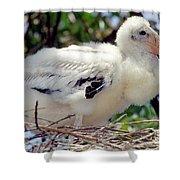 Wood Stork Nestling Shower Curtain