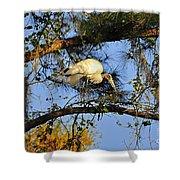 Wood Stork Perch Shower Curtain
