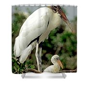 Wood Stork With Nestling Shower Curtain