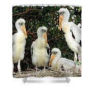 Wood Stork Young In Nest Shower Curtain