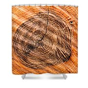 Wood Surface With Annual Rings Shower Curtain