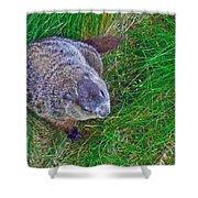 Woodchuck In Salmonier Nature Park-nl Shower Curtain
