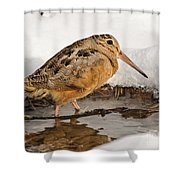 Woodcock In Winter Shower Curtain