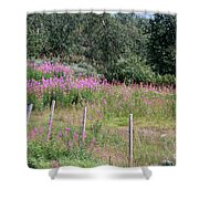Wooden Fence And Pink Fireweed In Norway Shower Curtain