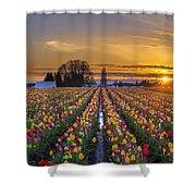 Wooden Shoe Tulip Festival Sunset Shower Curtain