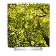 Woodland Background 02 Shower Curtain