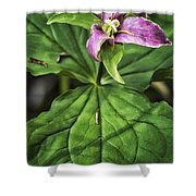 Woodland Beauty Shower Curtain