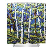 Woodland Birches Shower Curtain