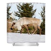 Woodland Caribou Shower Curtain