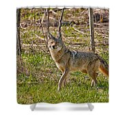 Woodland Coyote Shower Curtain