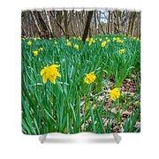 Woodland Daffodils Shower Curtain