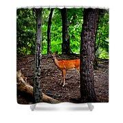 Woodland Deer Shower Curtain