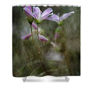 Woodland Delight 4 Shower Curtain