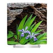Woodland Dwarf Iris Wildflowers Shower Curtain