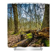 Woodland Fungi Shower Curtain