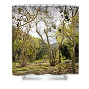 Woodland Glen In The California Vallecito Mountains Shower Curtain